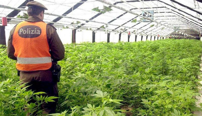 Blocco Frontiere Cannabis Light Importata Svizzera