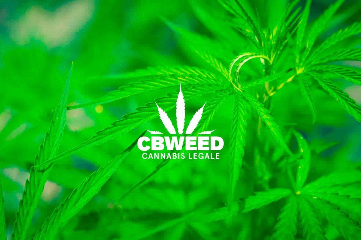 Cannabis CBD Fibromialgia Novita