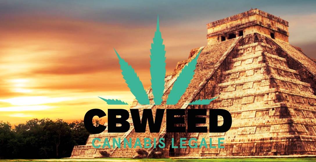 Legalizzazione Cannabis Contro Narcotraffico Messico Insegna Italia