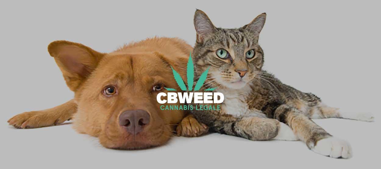 Cbd Cura Cani Gatti Nuova Frontiera Cannabis Terapeutica