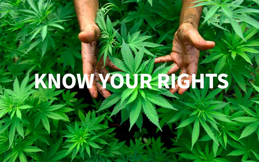 Diritti Consumatori Cannabis Documento