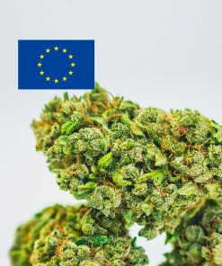 Cannabis Light Europe