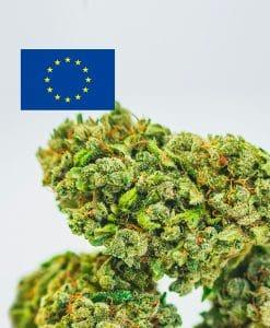 Cannabis Light Europa