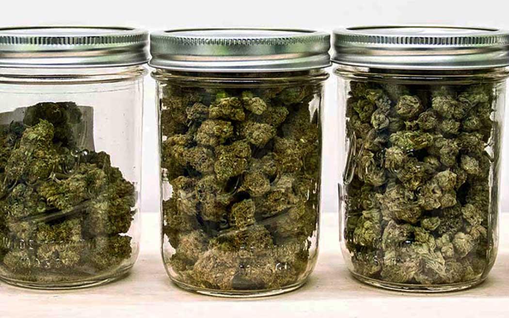 Come Conservare Infiorescenze Cannabis Light
