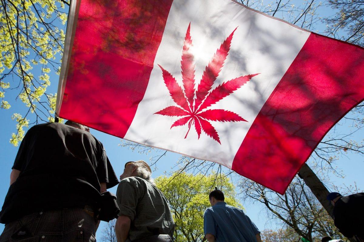 la national cannabis survey canadese sulluso della marijuana dopo la legalizzazione