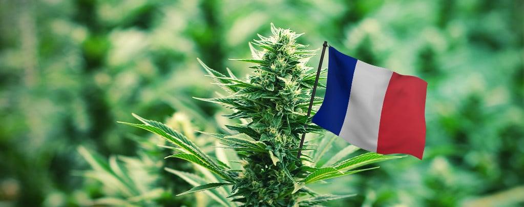 Legalizzazione Marijuana Fa Gola Francia