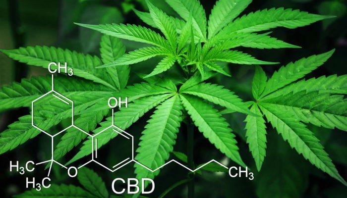 USA studio conferma cannabis alternativa antidolorifici