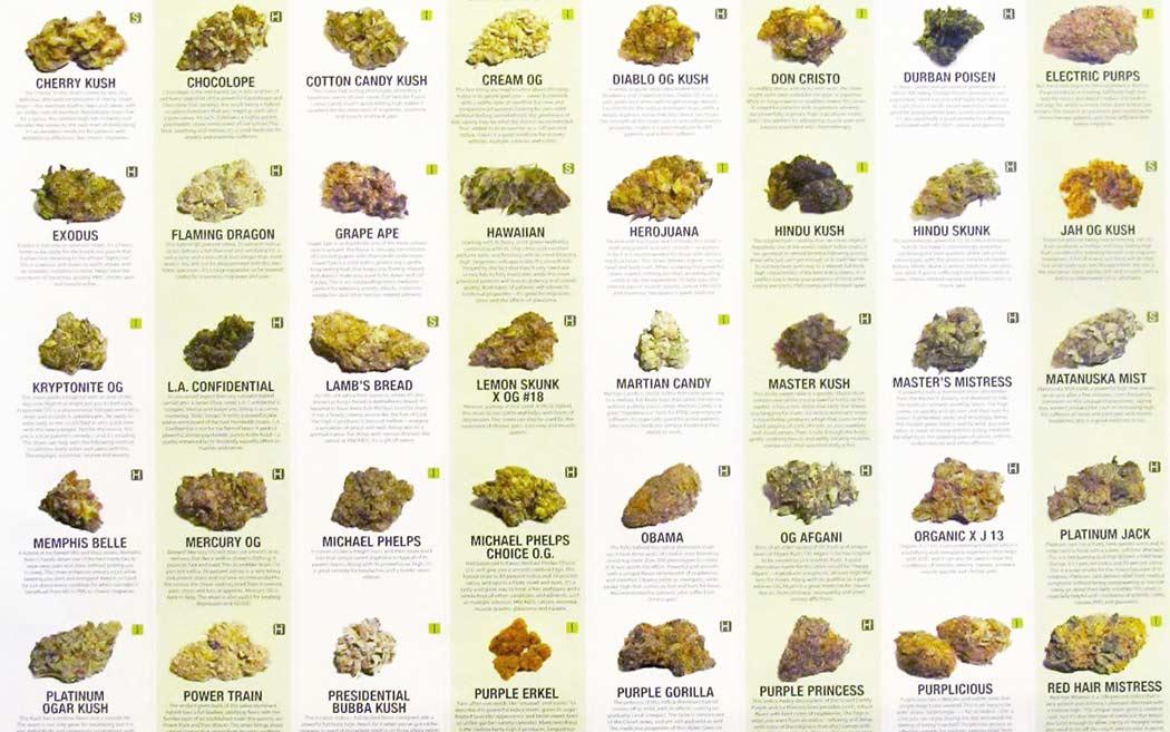 Genetiche Cannabis Famosa Storia Nomi Strani