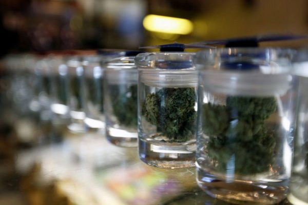 Guida Come Essiccare Conciare Infiorescenze Cannabis Legale