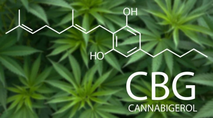 What Effects Cbg Cannabigerol Therapeutic Cannabinoid