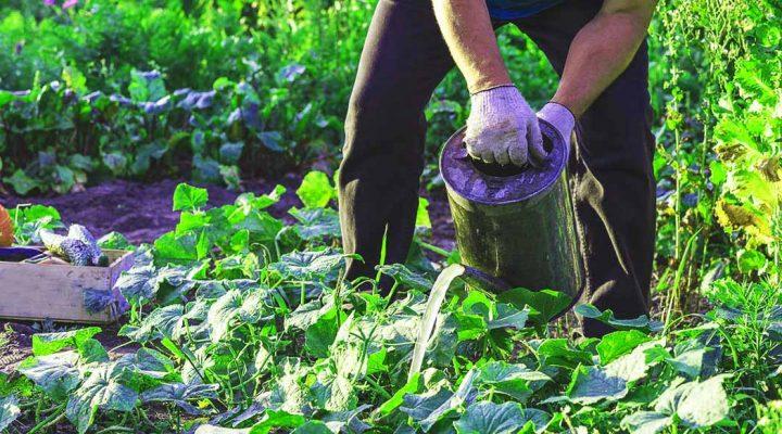 Vantaggi Compost Te Biologico Nutrimento Protezione
