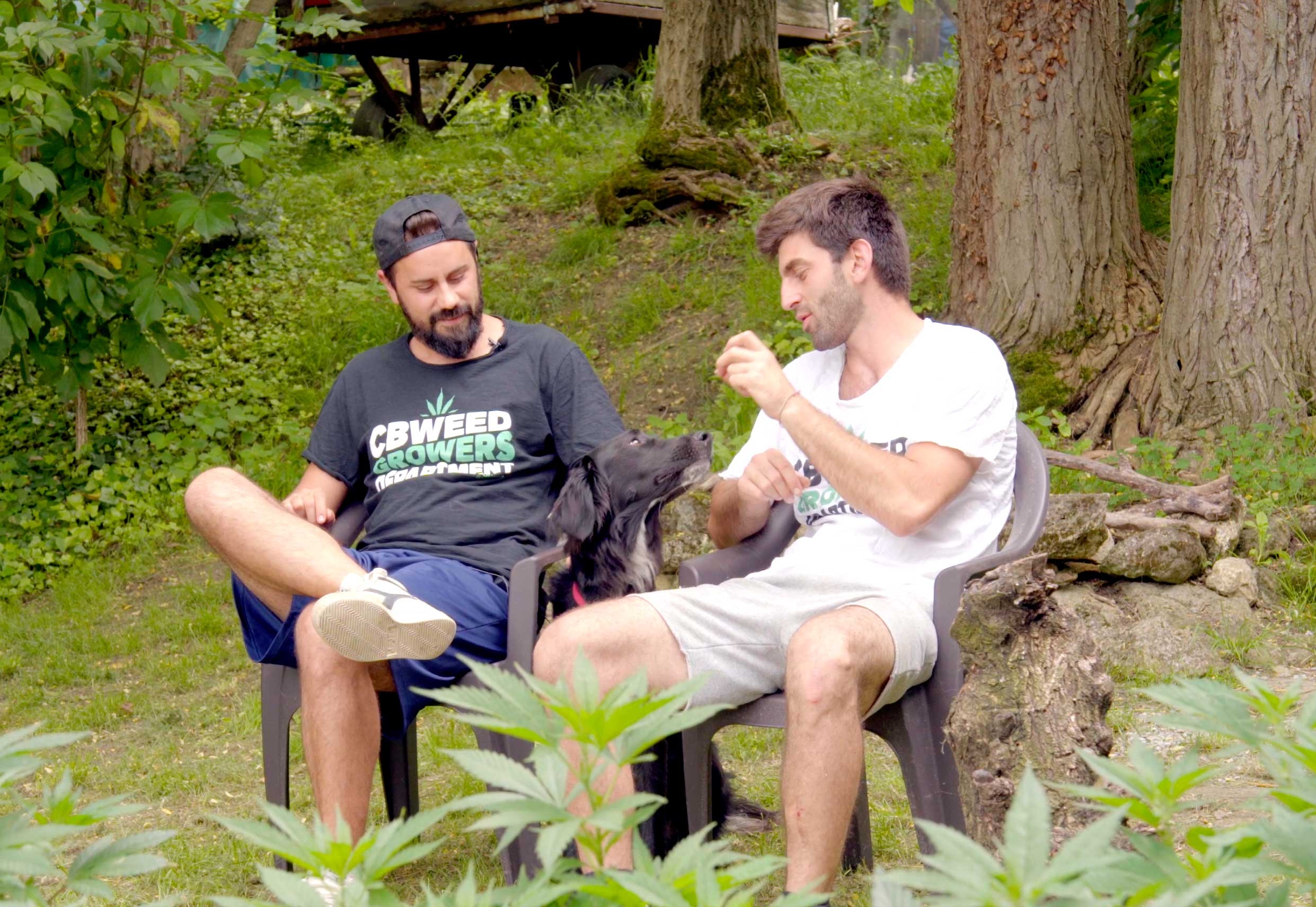 cannabis-talks