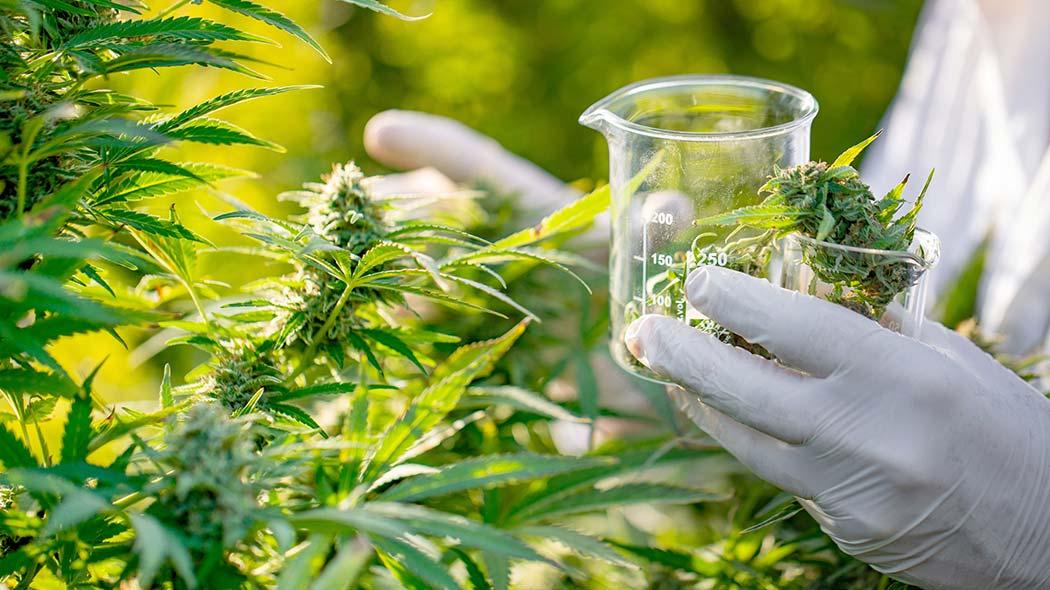 Guida Uso Fertilizzanti Coltivare Cannabis Legale
