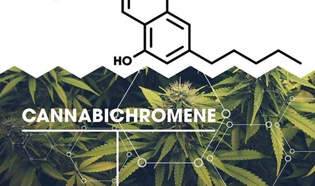 What Cannabichromene Anti-Inflammatory Painkilling Cannabinoid