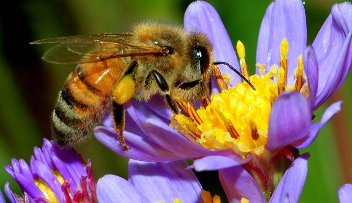 What's Cannabis Honey Recipe DIY Home