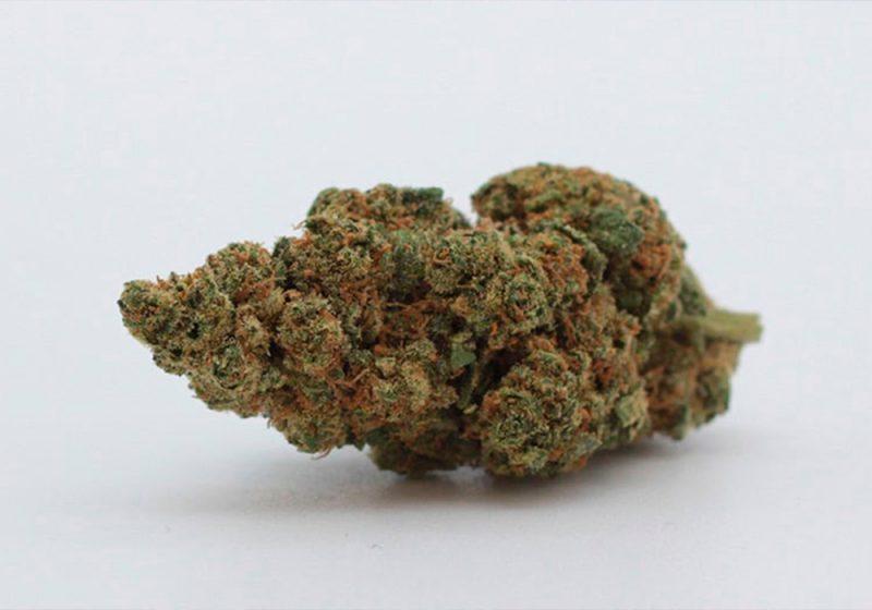 Caratteristiche-Genetiche-Cannabis-Diesel-Storia-Leggenda