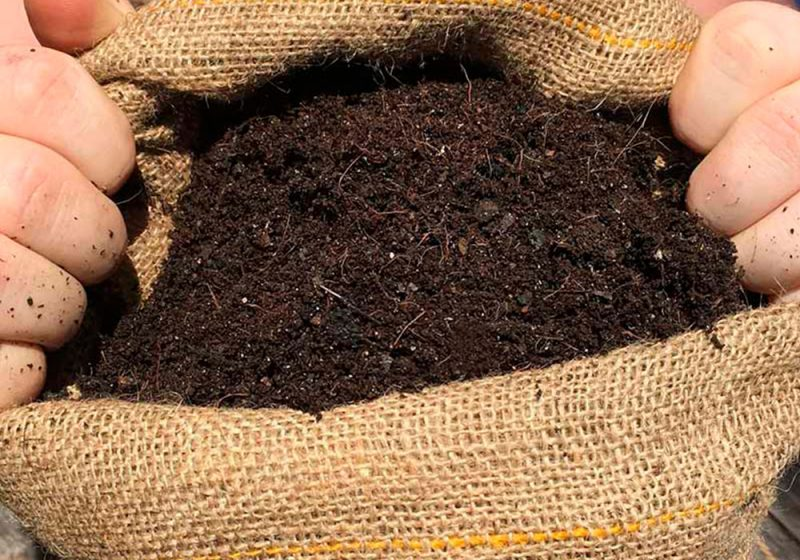 super-soil-blog-cbweed