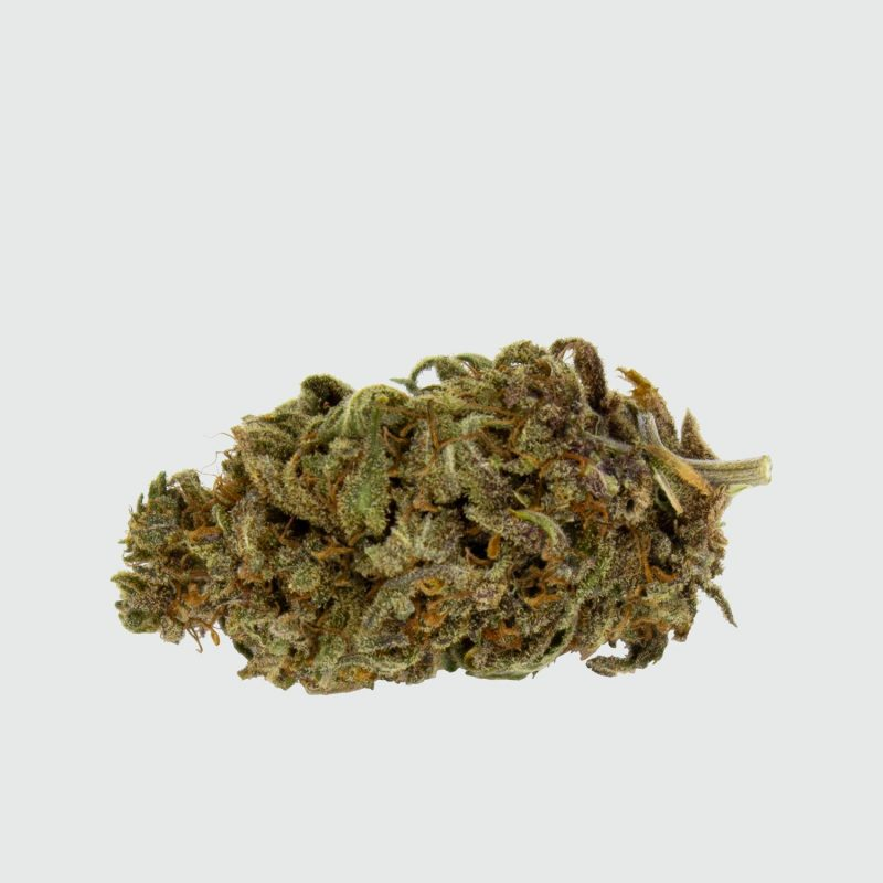 CBWEED-Green-House-Seed-Purple-Love-CBD