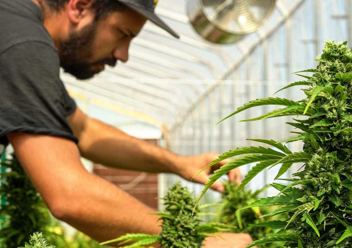 nostri-coltivi-cbweed-greenhouse
