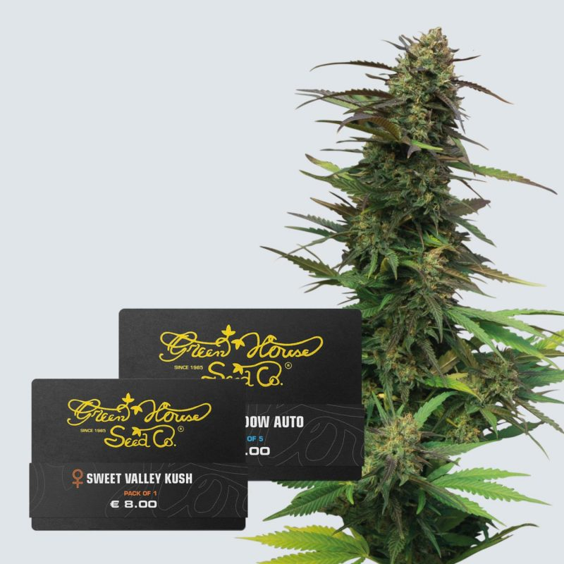 Collection THC Seeds